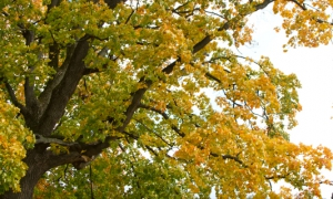 Свадьба в Царицыно осенью