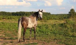 Фотосессии с лошадьми, Москва, кобыла Барби