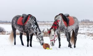 Фотосессии с лошадьми, Москва, Барби и Буся