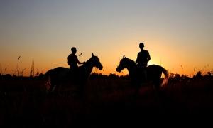 Фотосессии с лошадьми на закате, Москва
