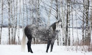 Фотосессии с лошадьми, Москва, кобыла Буся