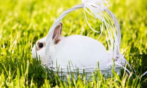 Семейная фотосессия мама и дочка с кроликом